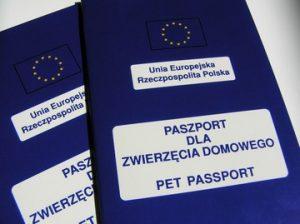 Wyjazd z psem za granicę